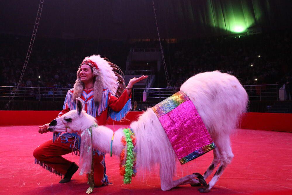 Эротика в цирке и на эстраде фото 634-902
